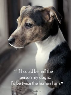 16 Dog Quotes That Will Melt Your Hear #dogquotes