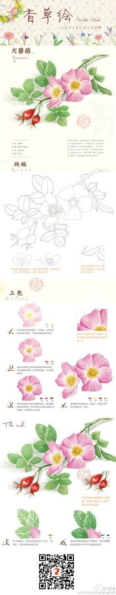 #教程#犬蔷薇——这么酷炫的名字,其实是这么柔美的花朵哦!