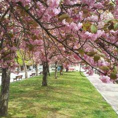 Paseo primaveral