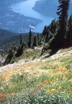 Mount Ellinor Trail, Just out of HoodsPort Wa, part of the Olympic National Park. @Megann Karch