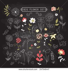 Set of hand drawing flowers and elements for design on chalkboard