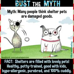 Shelter pets are not broken. Shelter pets are not damaged goods. Shelter pets ARE wonderful, loving beings capable of bringing immense light and joy into. Shelter Dogs, Rescue Dogs, Animal Rescue, Animal Adoption, I Love Dogs, Puppy Love, Dog Line, Cheap Pets, Find Pets