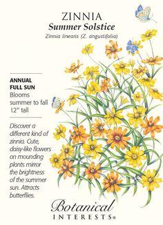 Summer Solstice Zinnia Seeds - 300 mg
