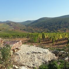 Hungary's most rewarded grape variety, the Furmint - Visit Hungary % Hungary, How To Introduce Yourself, Grand Canyon, Wine, Nature, Blog, Travel, Naturaleza, Viajes