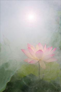 Lotus Flower Surreal Series: DD0A0661-1-1000