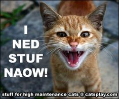 Reviews for Meow | Your place for reviews for cat trees, condos, furniture, and much more!