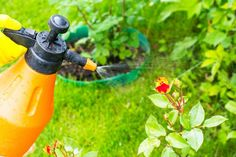 As far as possible, this post will concentrate on pest control tips that would assist keep away as much pests as you can. Some of the advises provided here will deal on specific pests but some may … Deer Repellant, Natural Insecticide, Household Pests, Water Sprinkler, Pest Management, Weed Control, Bug Control, Neem Oil, Garden Pests