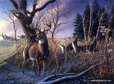 James Meger Shoulda Been There Hunting Painting, Hunting Art, Deer Hunting, Whitetail Hunting, Hunting Stuff, Pheasant Hunting, Whitetail Bucks, Wildlife Paintings, Wildlife Art