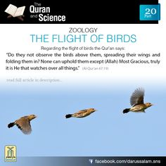 "Al-Qur'an An-Naĥl (The Bee) ""Do they not look at the birds, held poised In the midst of. Islam And Science, Science Facts, Allah Islam, Islam Quran, Islam Muslim, Quran Verses, Quran Quotes, Muslim Quotes, Islamic Quotes"