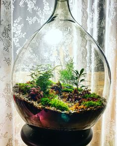"""Beautiful terrarium with the name """"RUSTY HILLTOP"""" made by the Plantentafel."""