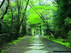 Ryuichi Sakamoto - Forbidden Colours (Original) one of uchnops' favourite tunes on youtube playlist