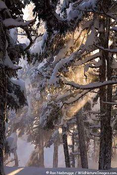 Sunbeams on snow laden trees along Lost Lake Trail, Chugach National Forest, Seward, Alaska