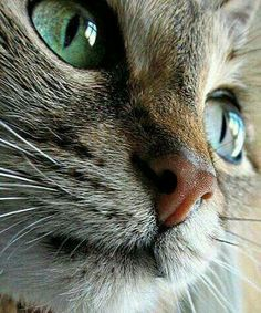These cute kittens will warm your heart. Cats are fascinating companions. Cute Cats And Kittens, I Love Cats, Crazy Cats, Kittens Cutest, Pretty Cats, Beautiful Cats, Animals Beautiful, Cute Animals, Pretty Kitty