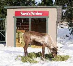 The Peak of Christmas at North Vancouver's Grouse Mountain is where you'll find sleigh rides, skating, gingerbread houses, Santa Claus, reindeer and more. Ski Hill, Canada Holiday, Grouse, North Vancouver, Santa And Reindeer, British Columbia, Skiing, Christmas, Mountain