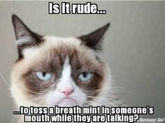 Grumpy cat memes to give you a laugh. You'll love grumpy cat even more. Grumpy Cat Quotes, Funny Grumpy Cat Memes, Cat Jokes, Funny Animal Memes, Funny Animal Pictures, Funny Cats, Funny Animals, Funny Memes, Funny Quotes