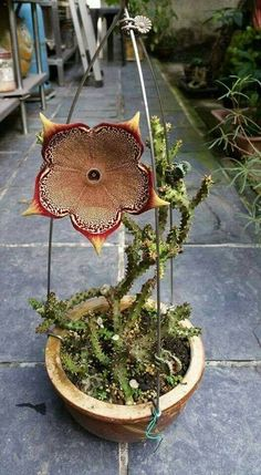 One word for this beauty Edithcolea Grandis pic.twitter.com/Kn5ku8z0wR