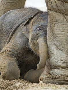 Zoo Animals – Cute Animals – Funny Animals – An Amazing Zoo Trip All About Elephants, Elephants Never Forget, Save The Elephants, Baby Elephants, Elephants Photos, Asian Elephant, Elephant Love, Animal Jokes, Funny Animal Videos
