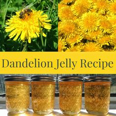 Linn Acres Farm: Dandelion Jelly Recipe I should do this with my crop! Jelly Recipes, Jam Recipes, Canning Recipes, Canning Soup, Dandelion Recipes, Dandelion Jam Recipe, Dandelion Jelly, Dandelion Uses, Homemade Jelly