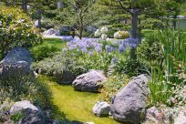 My backyard is quite plain, and I would love some decoration and landscaping. I love the rocks and bushes, it gives it a really natural look. I think I'm going to keep this picture for my gallery of what I want to do. I think the purple flowers are my favorite.