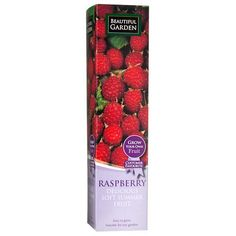 Raspberry Fruit Plant | Poundland
