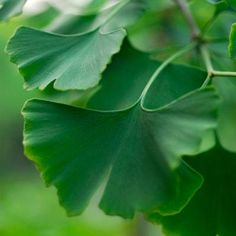 10 Herbal Remedies That Really Work