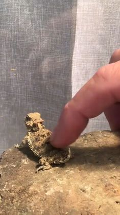 Sweet Who is a good boy. reptiles boy good reptiles and amphibians sweet Cute Animal Videos, Funny Animal Pictures, Funniest Pictures, Cute Little Animals, Cute Funny Animals, Tiny Baby Animals, Cute Lizard, Bearded Dragon Cute, Cute Reptiles