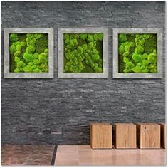Simple yet effective, moss art is a cost-effective alternative to living art. Using preserved moss we can create wall art in a range of designs, with very little maintenance required. Moss Wall Art, Moss Art, Home Irrigation Systems, Urban Planters, Vertical Succulent Gardens, Natural Stone Wall, Moss Garden, Plant Wall, Concrete Wall