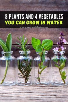 What& better than growing your favorite plants and vegetables in water, without worrying about the soil and mud which can mess them up, or not forget to water them on time? Natural Cough Remedies, Natural Cures, Herbal Remedies, Growing Herbs, Growing Vegetables, Root Vegetables, Herb Garden, Vegetable Garden, Container Gardening