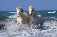 cavalli-bianchi-mare