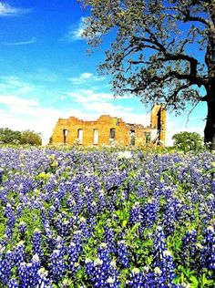 Spring 2012 in the Texas Hill Country. Taken on Hwy 71 between Llano and Brady.