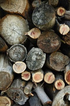 photography, wood,
