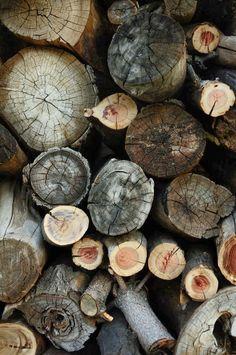 photography, wood,