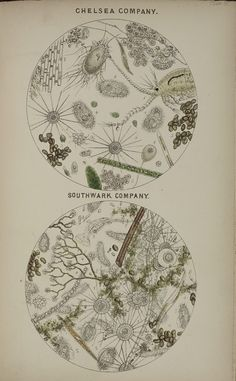 BBC - Get Creative - Putting art under the microscope. Illustrations by Robert Hooke Science Illustration, Botanical Illustration, Nature Illustrations, Science Art, Science Jokes, Easy Science, Preschool Science, Elementary Science, Science Fiction