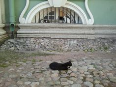 Санкт-Петербург. Коты Эрмитажа