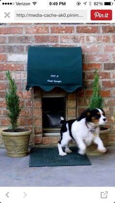 Dog wash station in laundry room this is nice with the laundry cover with hinge so can clean easily but furbabies safe replace the plant with cat grass and catnip doggy door pet solutioingenieria Images