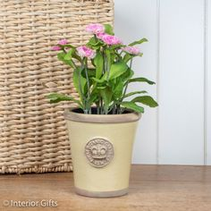 Kew Small Long Tom Plant Pot in Churlish Green from the Royal Botanic Gardens Collection of Planters for Flowers and Plants Kew Gardens, Botanical Gardens, Outdoor Gardens, Small Potted Plants, Terracotta Pots, Garden Pots, Earthy, Planter Pots, Flowers Garden