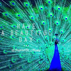Hello beautiful soul  Have a Beautiful Day!  #beautifulday #peacock #happiness