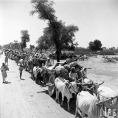 Rare Photos Of Partition Of India, 1947 Rare Pictures, Rare Photos, Vintage Photographs, Old Photos, History Of Pakistan, India And Pakistan, Karachi Pakistan, India After Independence, 1947 India