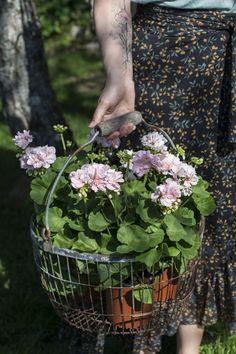 Grandmas Garden, Spring, Plants, Photos, Life, October, Summer, Pictures, Plant