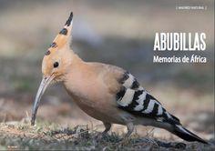 Es Madrid no Madriz Magazine Fauna, Madrid, Magazine, Bird, Natural, Animals, June, Animais, Animales