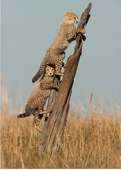 Africa | Wildlife | Safari