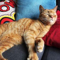 Reposting @mseckington: Blinky Dusty #catsofinstagram #cats #cat #catstagram #caturday #catsagram