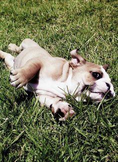 Oh do I love a #sideeye! #bulldogs