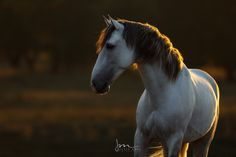 Some Beautiful Images, Ponies, Grass, Spanish, Horse, Retro, Portrait, Beauty, Horses