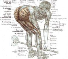 Tygryskowym okiem - ćwiczenia siłowe, domowe programy treningowe, zdrowy styl życia: Martwy ciąg na prostych nogach - obalamy mity, rozwiewamy wątpliwości