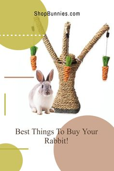 What are the best things to buy for your bun? we talk about it all in this blog post! Rabbit Toys, Pet Rabbit, Cute Baby Bunnies, Cute Babies, Rabbit Eating, Bunny Care, House Rabbit, New Toys, Cool Things To Buy