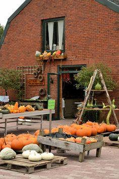 De Heidebloem, pumpkin market in IJzendijke, Zeeland, The Netherlands. Photo: LatteLisa
