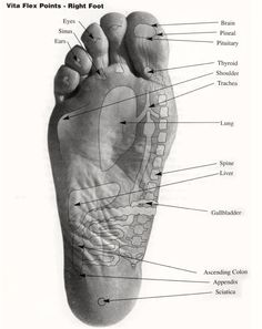 Where To Apply Oils On Your Feet Your feet's pores are 4 times larger than any other. Apply essential oils corresponding the organ you are having issues with.