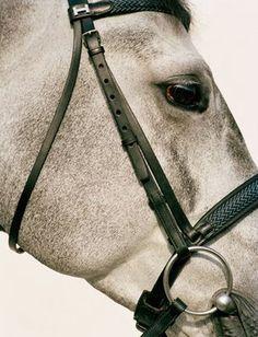 Hermes horse photos; Koto Bolofo