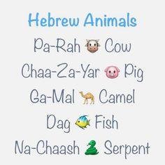 Hebrew Animals